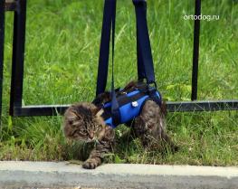 Поддержка для кошек